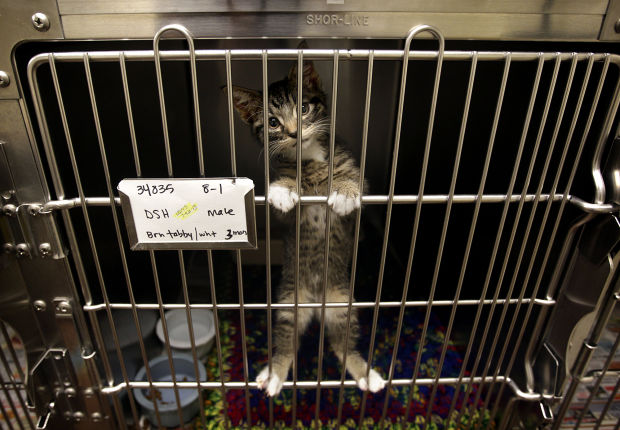 reasons to adopt from a shelter or rescue paws applause